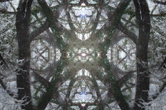 Tree-Cathedral-ceilings-02-big