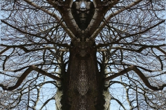 001-img_5713-totemtrees-panorama-vertical-big