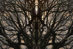 003-img_5996-b-totemtrees-panorama-vertical-big