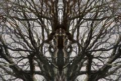 004-img_5996-totemtrees-panorama-vertical-big
