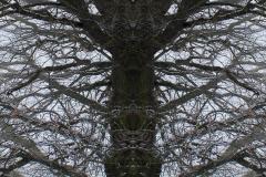 005-img_6018-totemtrees-panorama-vertical-big
