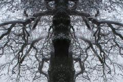 006-img_6054-totemtrees-panorama-vertical-big