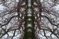 007-img_6346-50-totemtrees-panorama-vertical-big