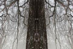 008-img_6469-72-treetotem-panorama-vertical-big