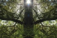 009-img_7048-merge-c-totemtrees-panorama-vertical-big