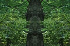 010-img_8542-merge-b-totemtrees-panorama-vertical-big