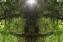 011-img_8553-merge-b-totemtrees-panorama-vertical-big