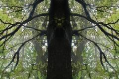 012-img_8700-merge-c-totemtrees-panorama-vertical-big