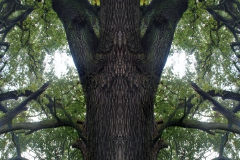 013-img_8661-merge-a-totemtrees-panorama-vertical-big