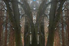 014-img_6604-b-merge-a-totemtrees-panorama-vertical-big