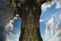 016-img_6922-totemtrees-panorama-vertical-big