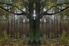 017-img_8852-totemtrees-panorama-vertical-big