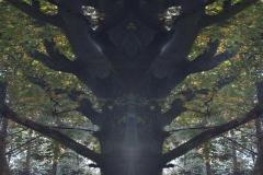 019-img_8847-totemtrees-panorama-vertical-big