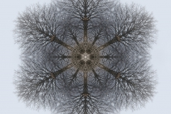 tree-seed-mandala-001-big