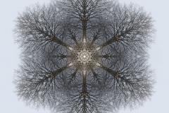 tree-seed-mandala-002-big