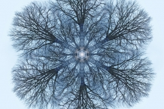tree-seed-mandala-003-big