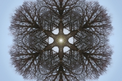 tree-seed-mandala-005-big