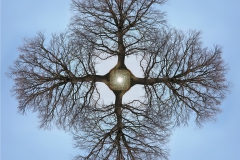 tree-seed-mandala-006-big