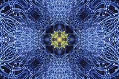 tree-seed-mandala-1-04-003b-big