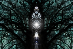 002tree-catheedral-horizontalb_big