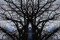 012tree-catheedral-horizontalb_big