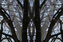 013tree-catheedral-vertical_big