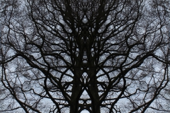 021tree-catheedral-vertical_big