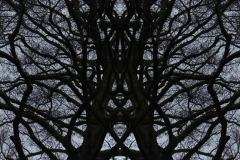 022tree-catheedral-vertical_big