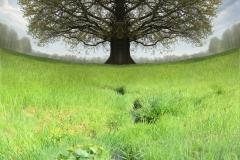 img_6897-tree-big
