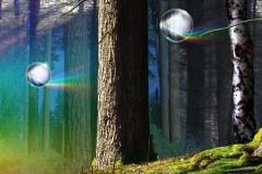 regenbogenwunderwald_big2