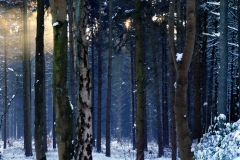 winter_wunder_wald_002_big